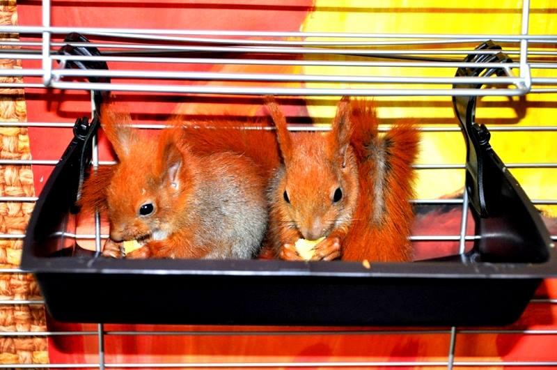 Wiewiórki z nieba